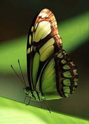 20060808210502-mariposa-selva.jpg