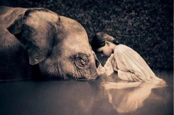 20070222195928-nina-y-elefante.jpg