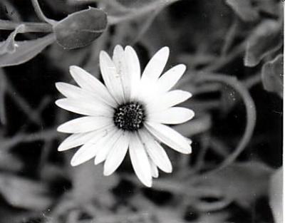 20090321202723-flor.jpg