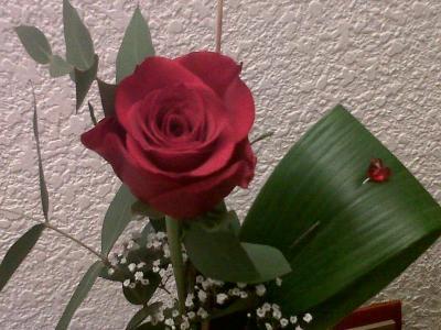 20120424003411-rosa.jpg