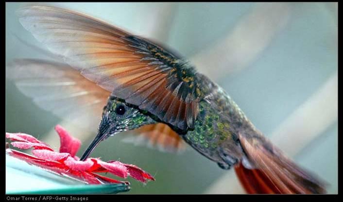 20070306234638-colibri.jpg