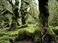 20070627003534-200x150-bosque-verde.jpg