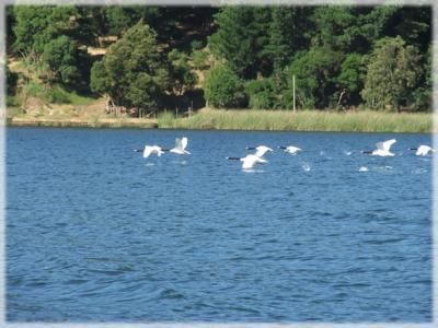 20080129210743-lago-20vichuquen.jpg
