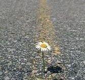 20101022200417-flor-en-el-asfalto-2-.jpg