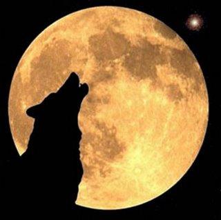 20101213231107-lobo-aullando-a-la-luna-.jpg