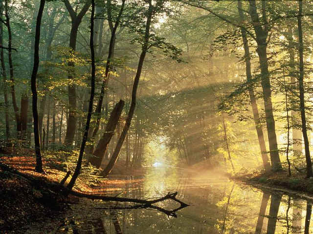20110331234735-bosque.jpg