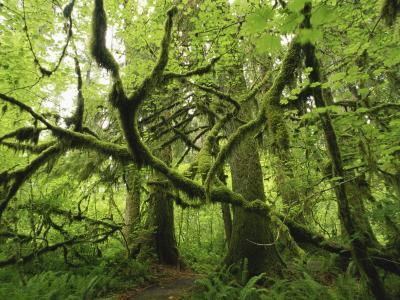 20110502231346-bosque7-1-.jpg