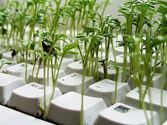 20140123235800-bosque-teclado.jpg